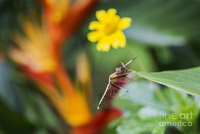 Photograph - Dragonfly In Paradise by Nola Lee Kelsey