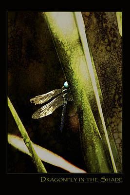 Digital Art - Dragonfly In The Shade Poster by AGeekonaBike Fine