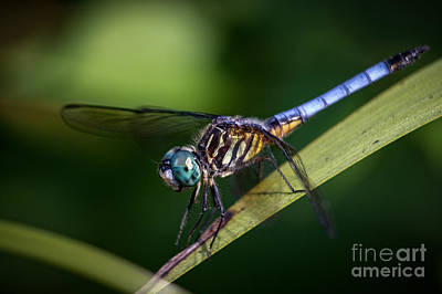 Dragonfly In The Wind Art Print