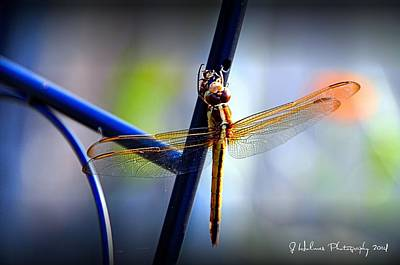 Photograph - Dragonfly by Jerome Holmes