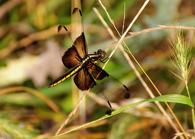 Photograph - Dragonfly by John Johnson