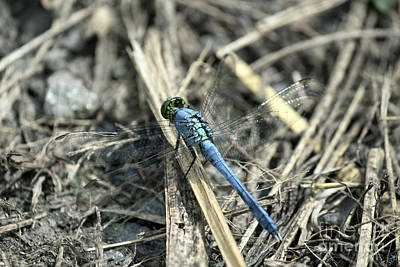 Photograph - Dragonfly Leadng The Way by Sandra Clark