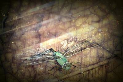 Dragonfly Leap Of Faith Art Print by Dawna Morton