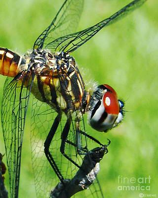 Photograph - Dragonfly by Lizi Beard-Ward