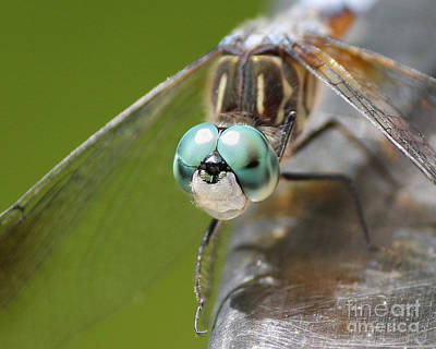 Dragonfly Macro Art Print