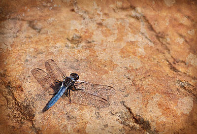 Photograph - Dragonfly by Melinda Fawver
