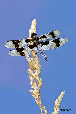 Photograph - Dragonfly by Michele Wright