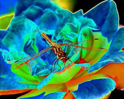 Photograph - Dragonfly On A Cosmic Rose by Ben Upham III