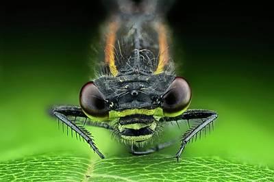 Dragonflies Photograph - Dragonfly On A Leaf by Frank Fox