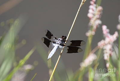 Photograph - Dragonfly On Grass 2 by Erica Hanel
