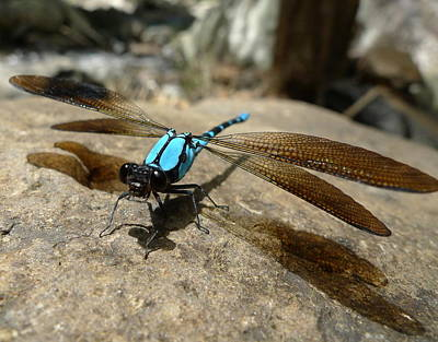 Dragonfly Photograph - Dragonfly Rock 2 by Kchink Flinch