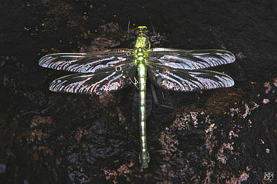 Photograph - Dragonfly On Siskiwit Lake by John Meader