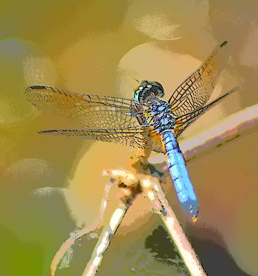 Metal Dragonfly Digital Art - Dragonfly On Tan by Sheri McLeroy