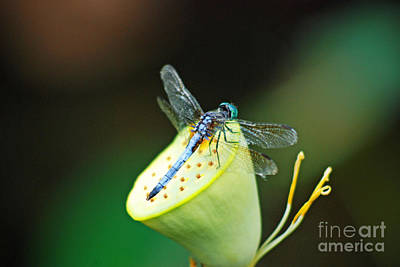 Digital Art - Dragonfly On Waterlily by Eva Kaufman