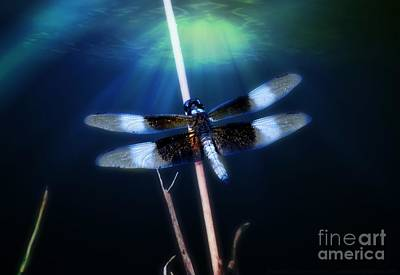 Photograph - Dragonfly by Peggy Franz