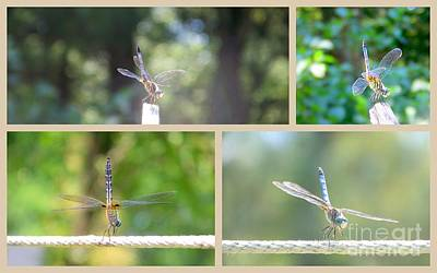 Photograph - Dragonfly Photo Shoot Collage by Eunice Miller