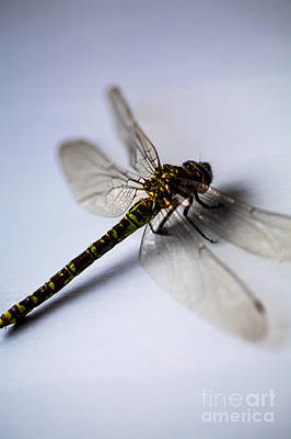 Photograph - Dragonfly Portrait by Jan Bickerton