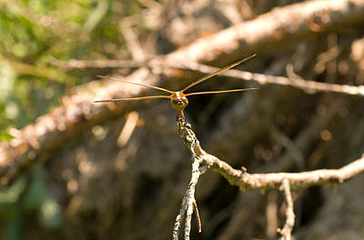 Photograph - Dragonfly Ready For Take Off by Greg Graham