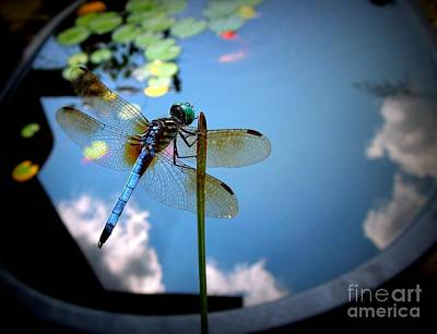 Photograph - Dragonfly Reflecting On A Beautiful Day by Renee Trenholm