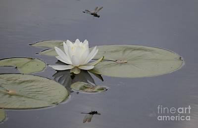 Photograph - Dragonfly Reflection by Jane Ford