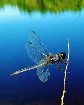 Dragonflies Photograph - Dragonfly by Sarah Pemberton