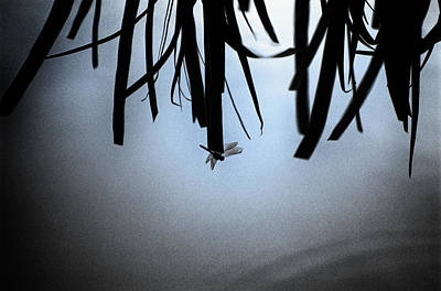 Photograph - Dragonfly Silhouette by Jeremy Herman