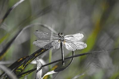Photograph - Dragonfly-silvermetal by Rae Ann  M Garrett
