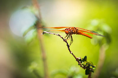 Dragonfly Smile Art Print by Priya Ghose