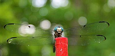 Easter Egg Hunt Rights Managed Images - Dragonfly Royalty-Free Image by Vicki Dreher