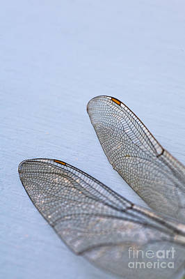 Photograph - Dragonfly Wings 3 by Jan Bickerton