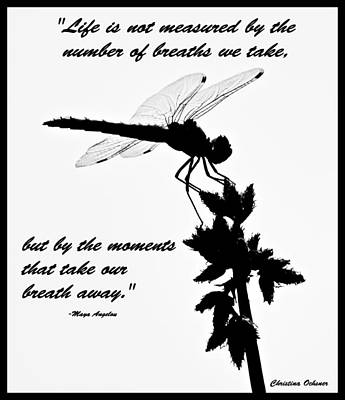 Dragonfly Photograph - Dragonfly With Quote by Christina Ochsner