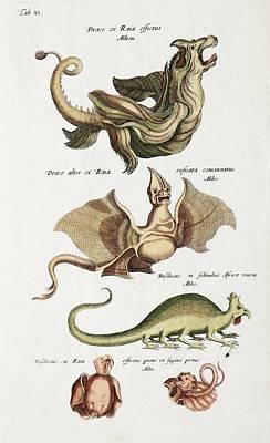 Naturalis Photograph - Dragons by Paul D Stewart