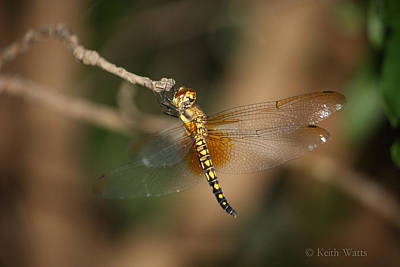 Dragonflys Photograph - Dragon's Roost by Keith Watts