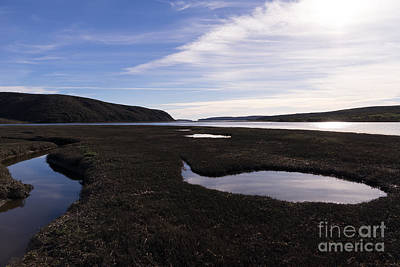 Contemplative Photograph - Drakes Bay Oyster Company At Drakes Estero In Inverness Point Reyes California Dsc2234 by Wingsdomain Art and Photography