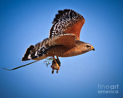 Raptor Photograph - Drama In Real Life by Beth Sargent
