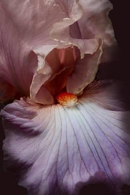 Dramatic Iris Flower Portrait Art Print by Jennie Marie Schell