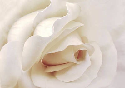 Photograph - Dramatic Ivory Rose Flower by Jennie Marie Schell