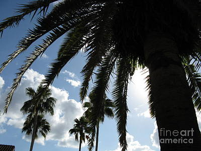 Art Print featuring the photograph Dramatic Palm by Jeanne Forsythe