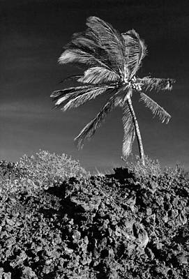 Photograph - Dramatic Palm by Mary Haber