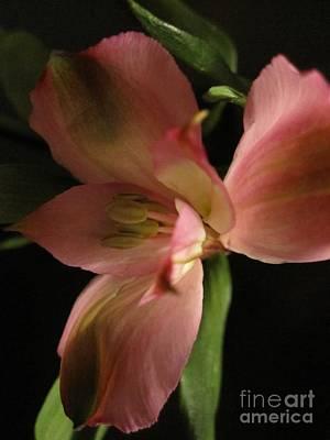 Photograph - Dramatic Pink Flower by Tara  Shalton