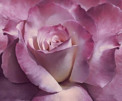 Photograph - Dramatic Plum Rose Flower by Jennie Marie Schell