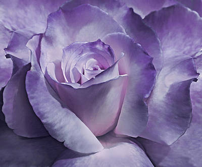 Photograph - Dramatic Purple Rose Flower by Jennie Marie Schell