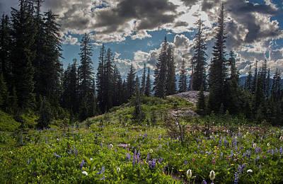 Dramatic Rainier Flower Meadows Print by Mike Reid