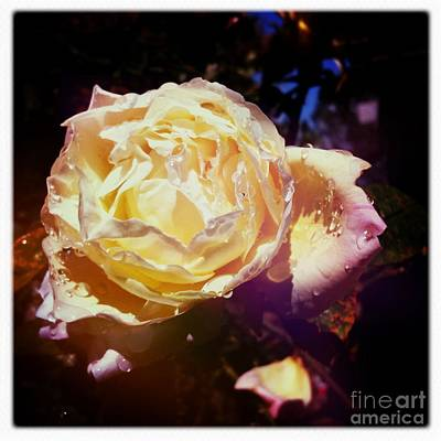 Dramatic Rose Art Print