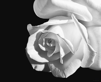 Photograph - Dramatic Rose Flower Black And White by Jennie Marie Schell