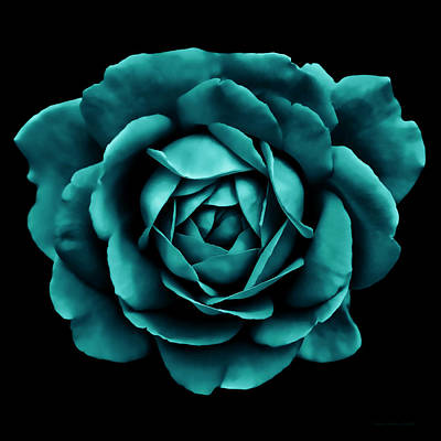 Photograph - Dramatic Teal Green Rose Portrait by Jennie Marie Schell