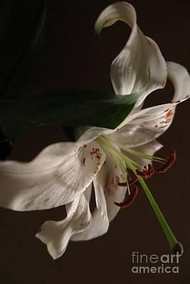 Photograph - Dramatic White Lily2 by Tara  Shalton