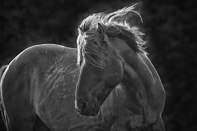 Outer Rim Photograph - Dramatic Wild Mustang by Bob Decker