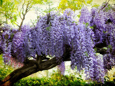 Draping Wisteria Art Print by Jessica Jenney