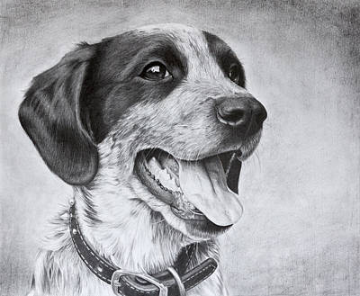 Cattle Dog Drawing - Drawing Of A Puppy by Karen Broemmelsick